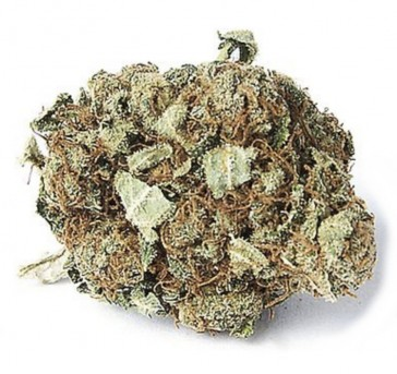 Orange Bud cbd hemp