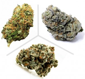 Hemp Buds taster pack UK